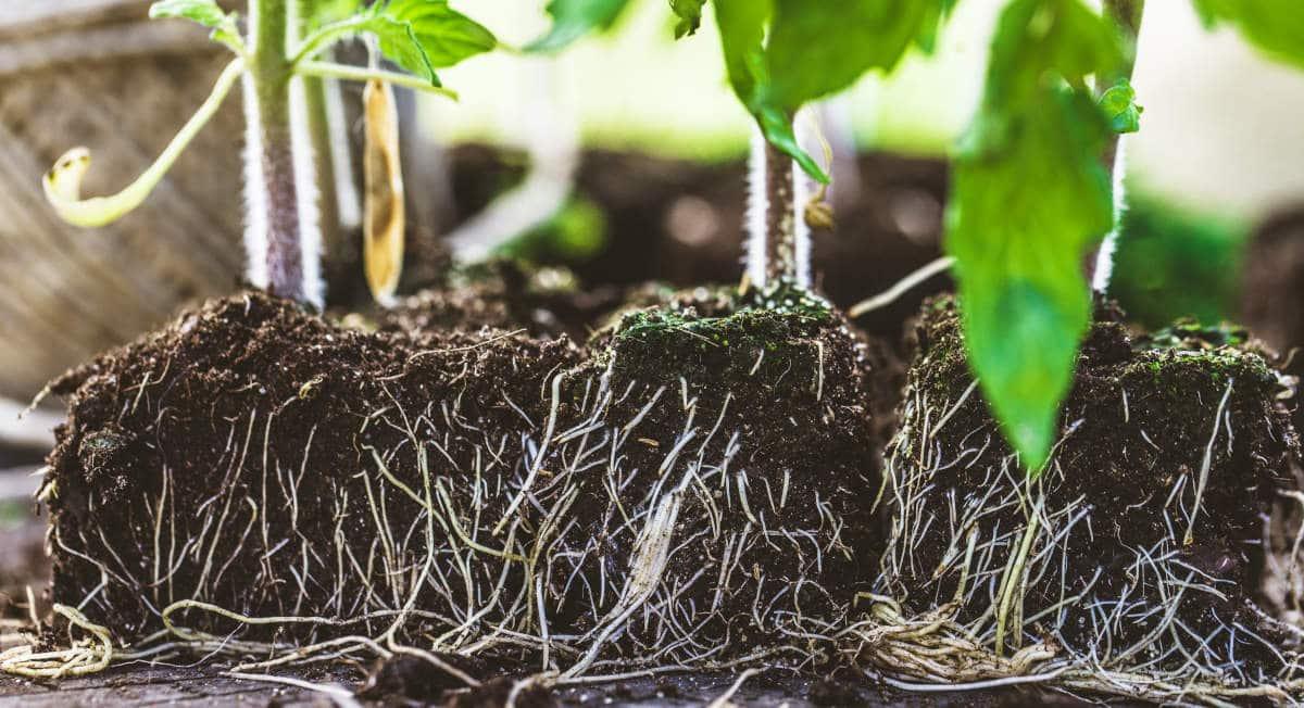 Guía de Sustratos para Plantas