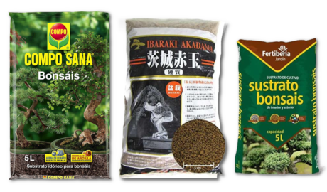 Guía de Sustratos para Plantas: Bonsai