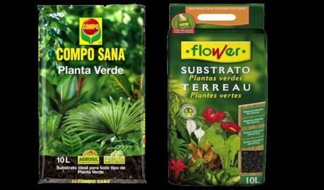 Guía de Sustratos para Plantas: Planta Verde