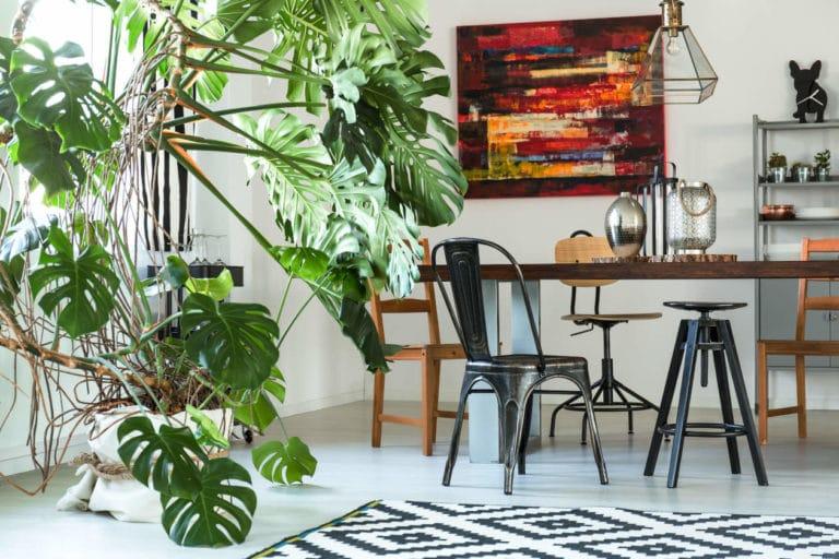 3 Plantas Elegantes Para Oficina y Fáciles de Cuidar