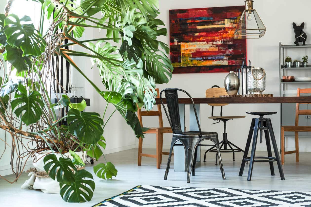 Plantas Elegantes para Oficina