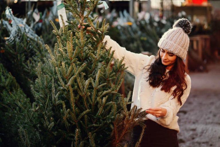 Cómo Cuidar del Árbol de Navidad. El Abeto Natural en Casa