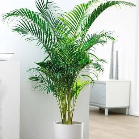 Plantas Fáciles de Oficina