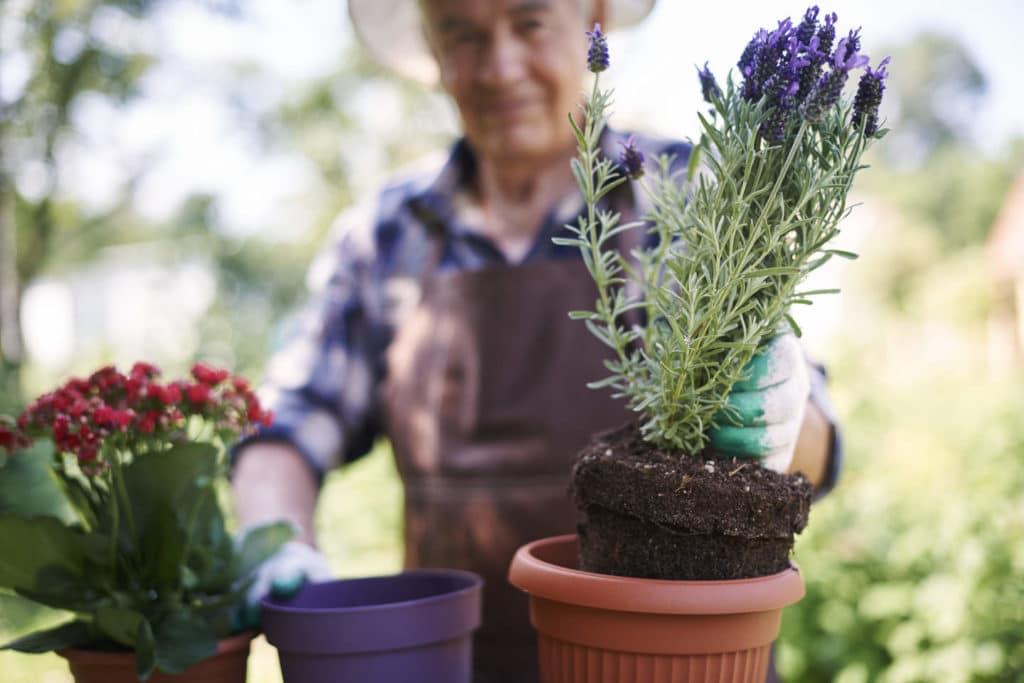 Lavanda y Plantas Aromáticas en 2021