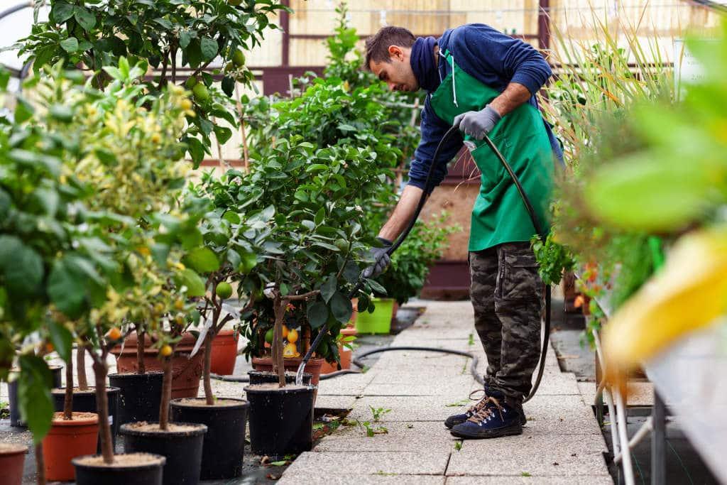 Jardinero Regando en Vivero
