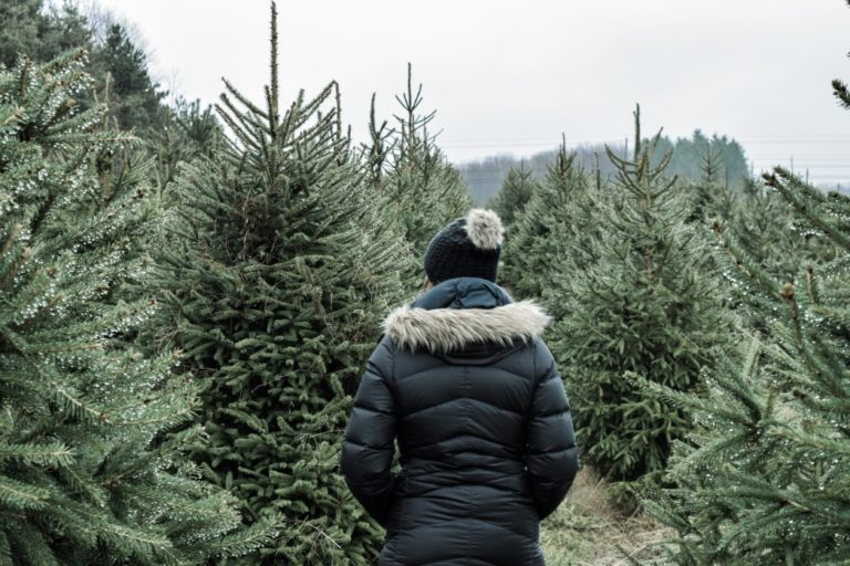 Los 3 Tipos de Árboles de Navidad Naturales Que Puedes Comprar en Tiendas