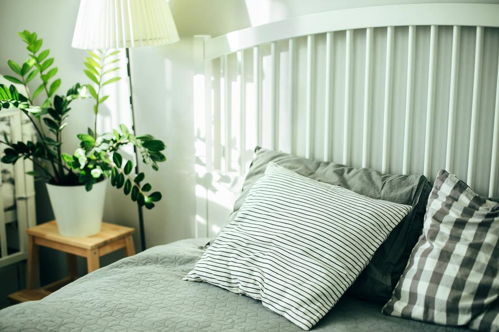 razones para tener plantas en tu habitación