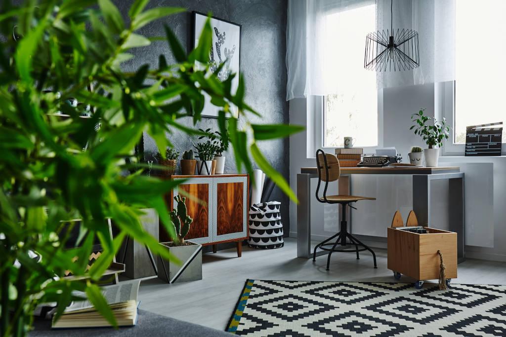 Razones para tener plantas en casa
