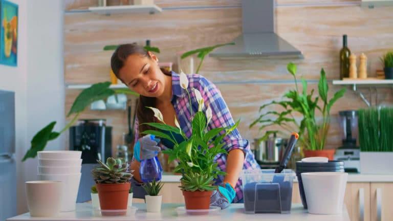 7 Razones para Tener Plantas en Casa o en tu Habitación