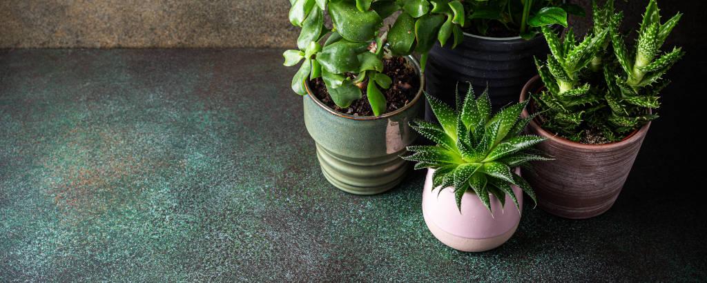 10 Razones Para Tener Plantas en Casa