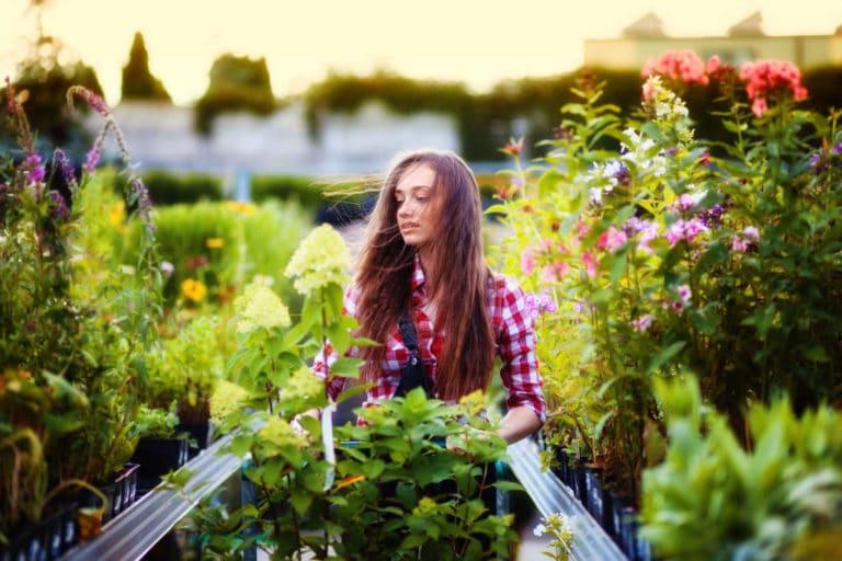 Los Tipos de Clientes de un Centro de Jardinería? Cuáles Son y su Clasificación y Tipología