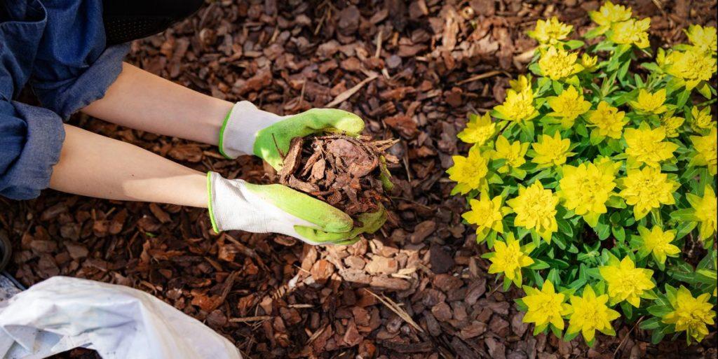Proteger el jardín de las Heladas - Mulching