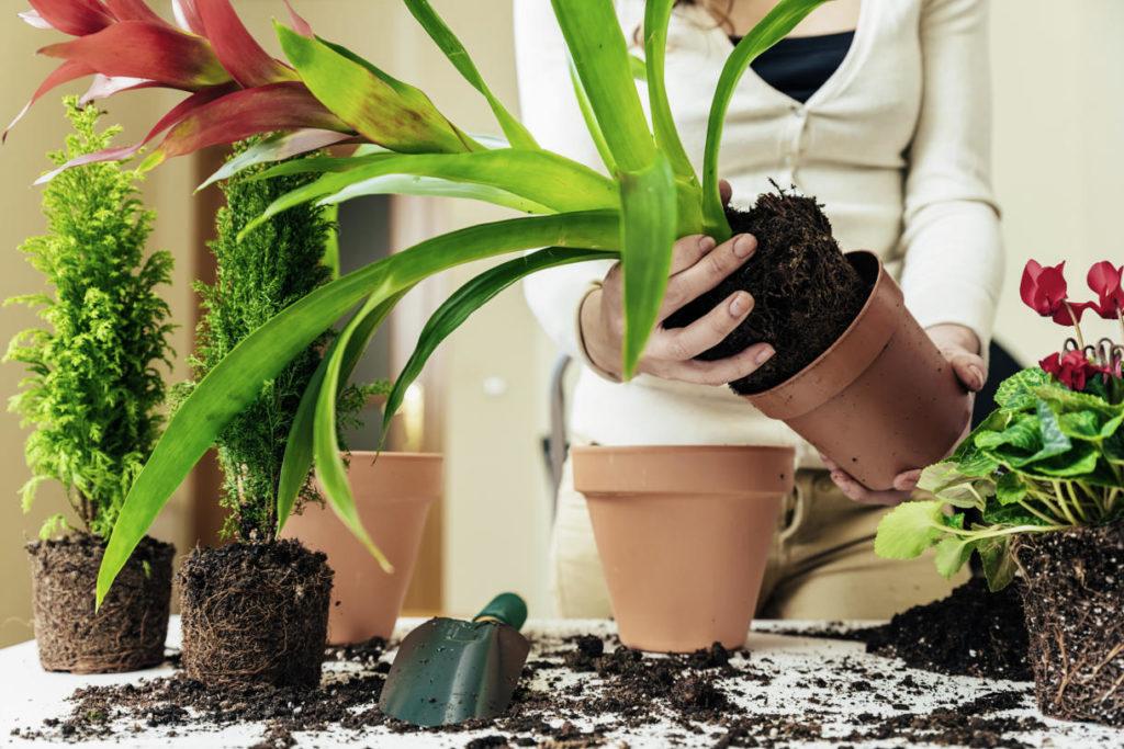 Cuando trasplantar una planta