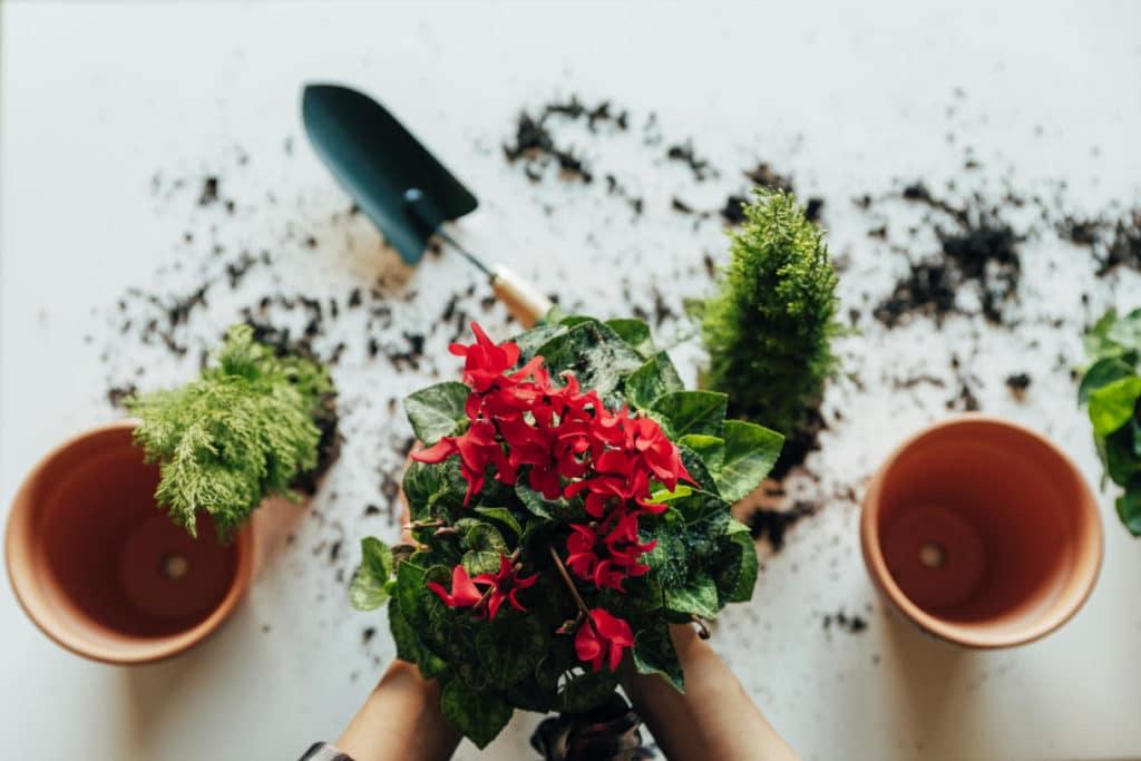 Cuándo se Debe Trasplantar una planta
