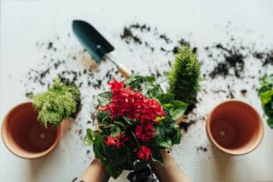 ¿Cuándo se Debe Trasplantar una Planta? Guía Rápida
