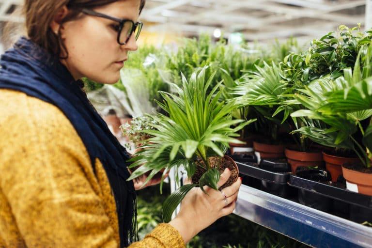 Preguntas Frecuentes sobre Jardinería. 7 Preguntas y 7 Respuestas Más Habituales