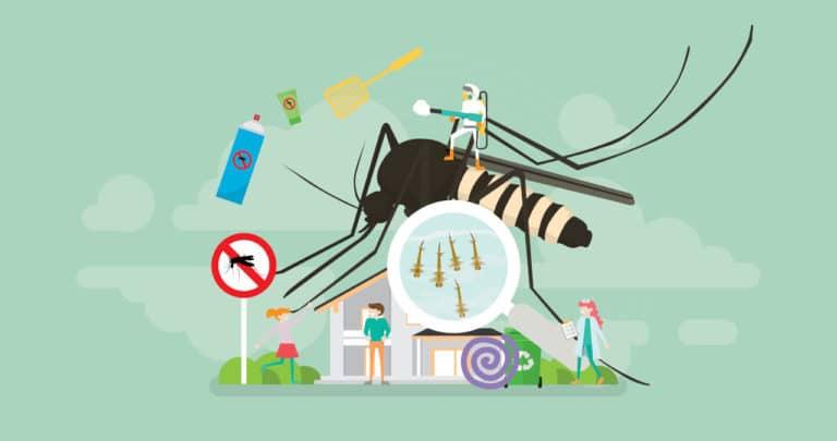 5 Plantas Anti Mosquitos para Tu Jardín o Terraza