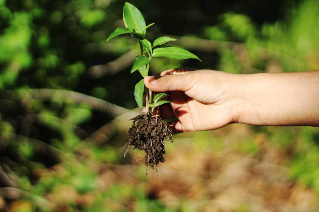 Arrancar malas hierbas en jardín