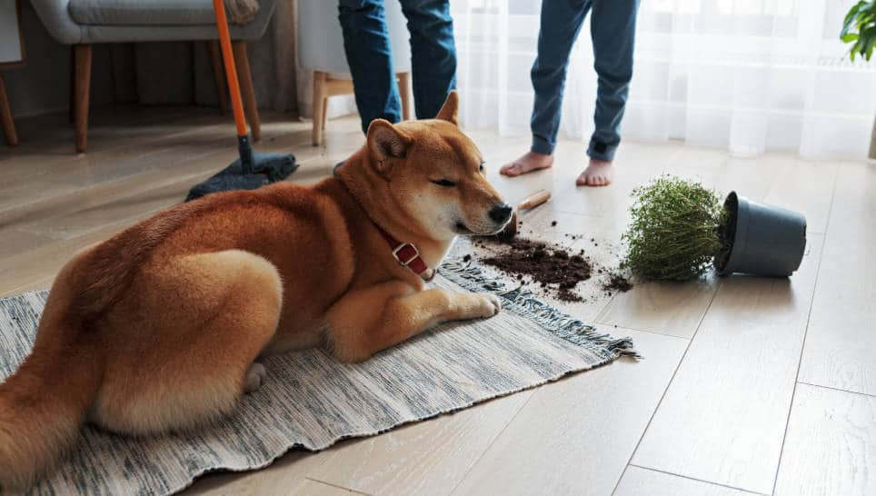 Como Evitar que las Mascotas se coman tus plantas
