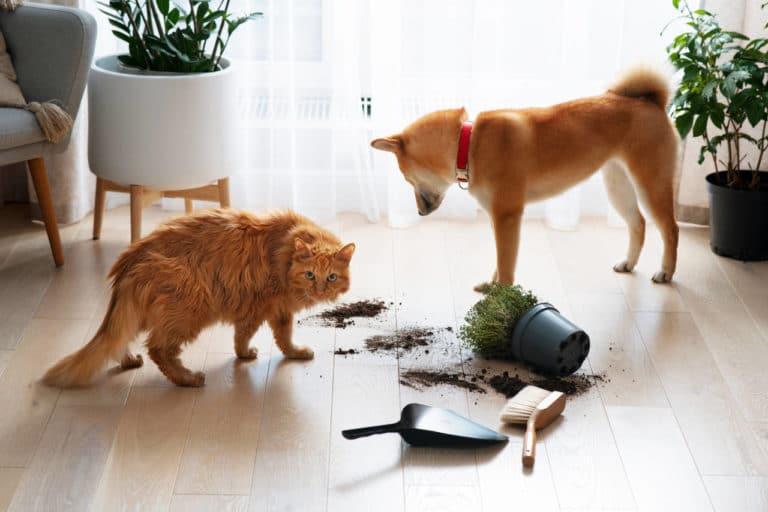 Algunas Plantas Repelentes de Perros y Gatos Que Podemos Tener en Interior o en el Jardín