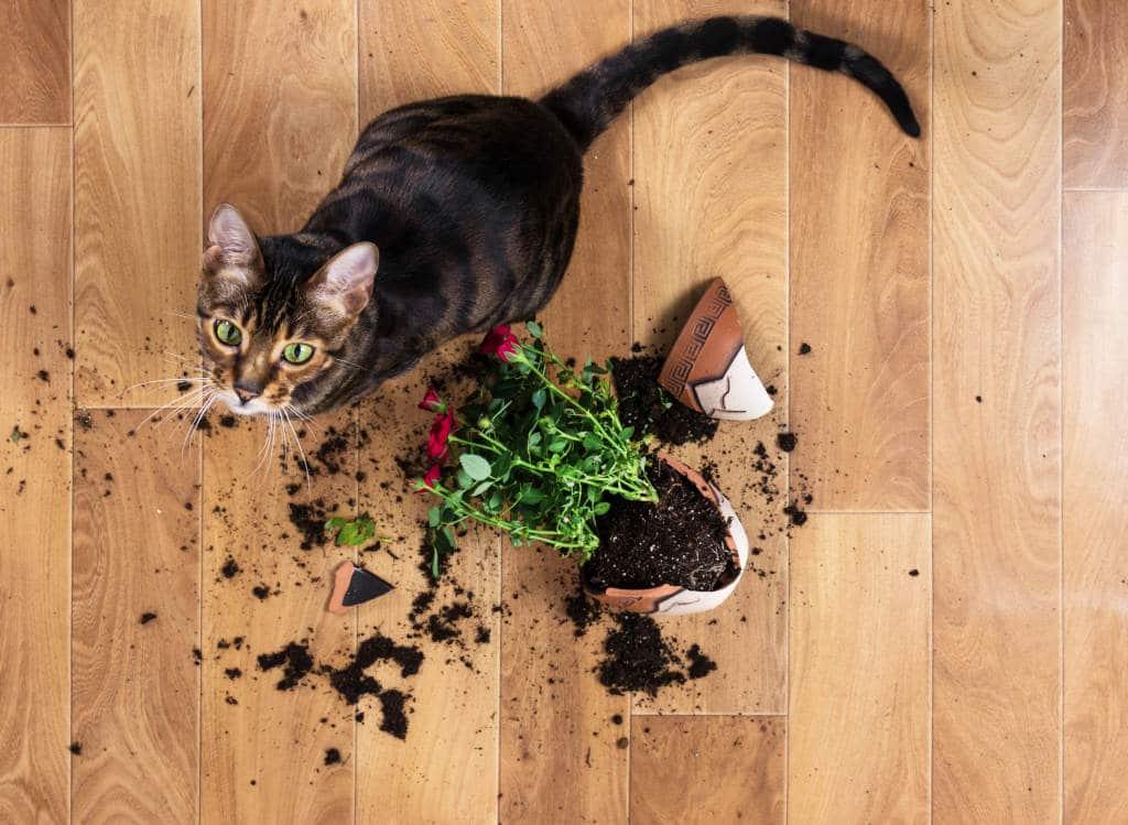 Plantas Aromáticas como Plantas Repelentes de Perros y Gatos