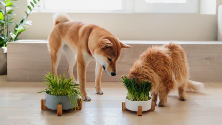 Plantas Venenosas para Perros y Gatos