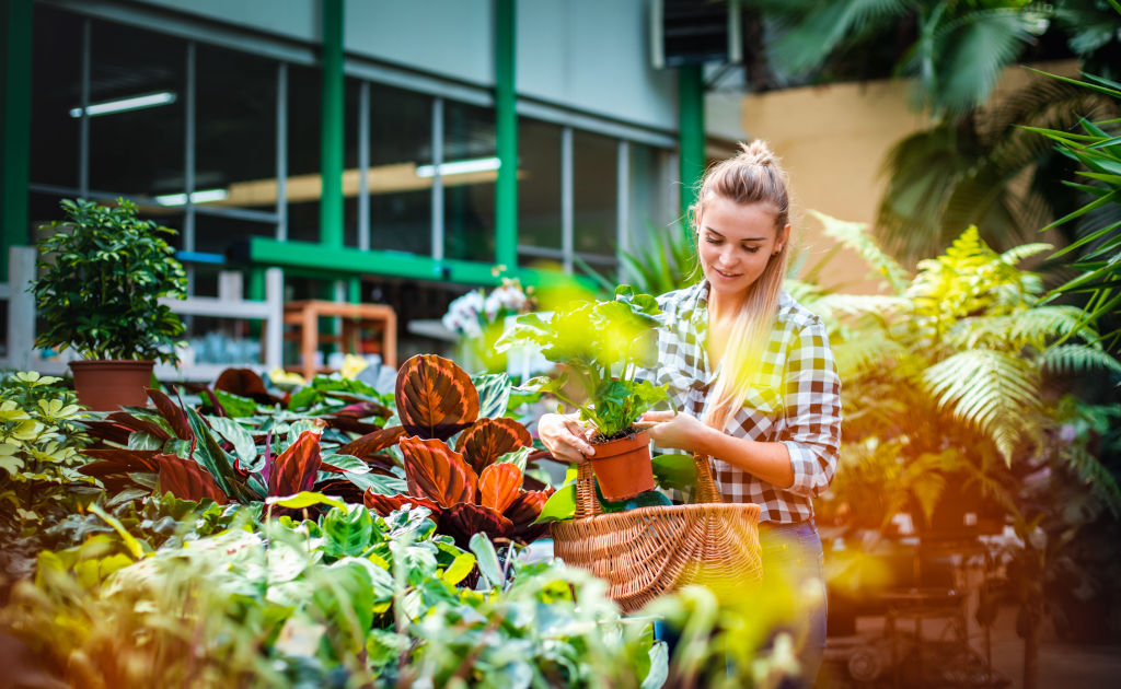 Cuidados de Plantas durante el Verano