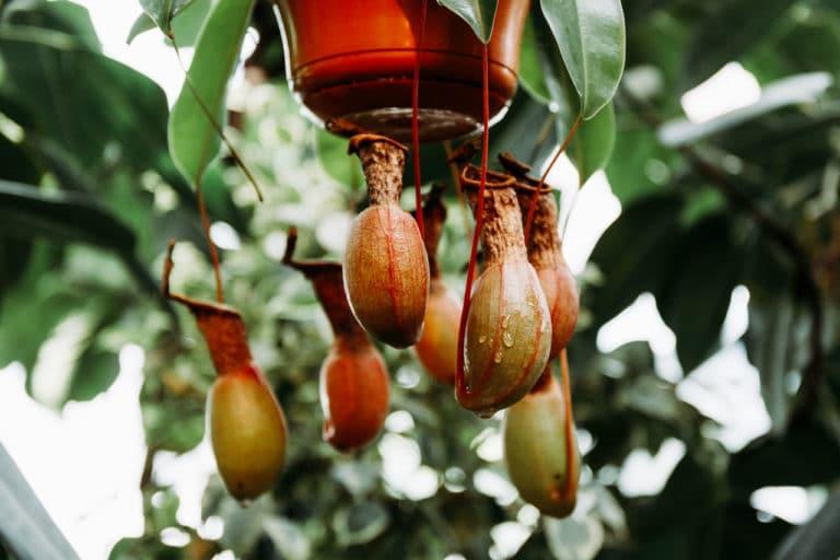 Plantas Sorprendentes Raras y Exóticas Que Puedes Comprar en un Centro de Jardinería
