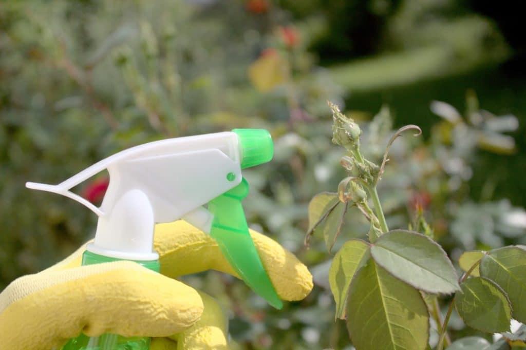 Guía de Plagas y Enfermedades de las Plantas