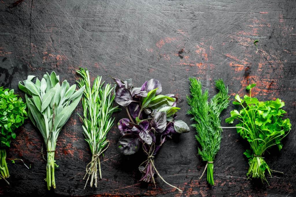 Cultivar Aromáticas en Casa