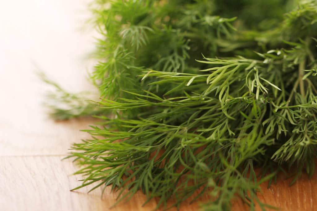 Planta Culinaria: Eneldo