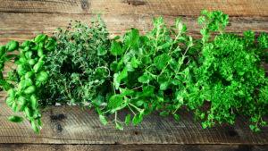 9 Hierbas Aromáticas para Cultivar en Casa y Usar en Nuestra Cocina