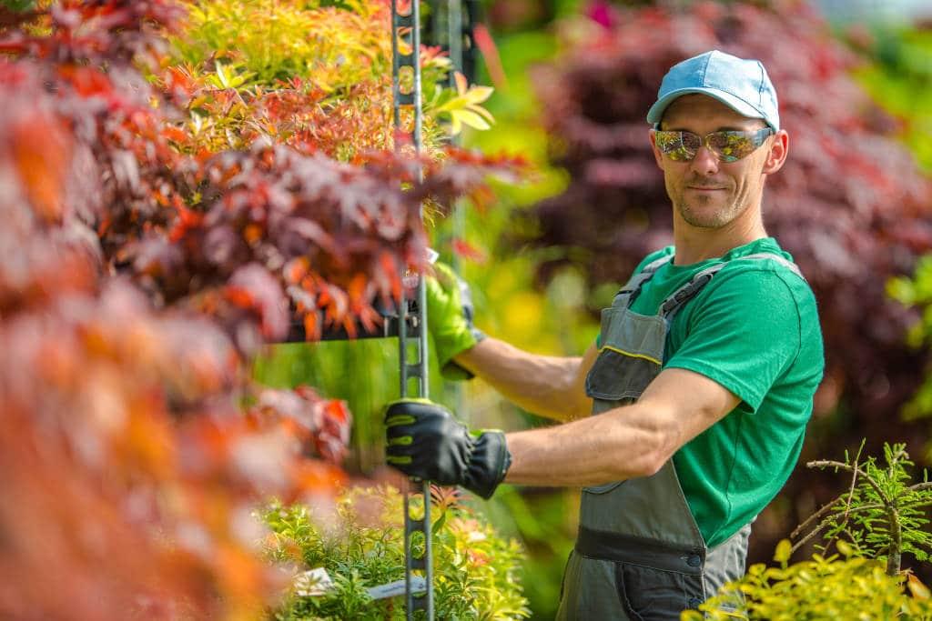 Plantas y Flores para el Otoño de 2021